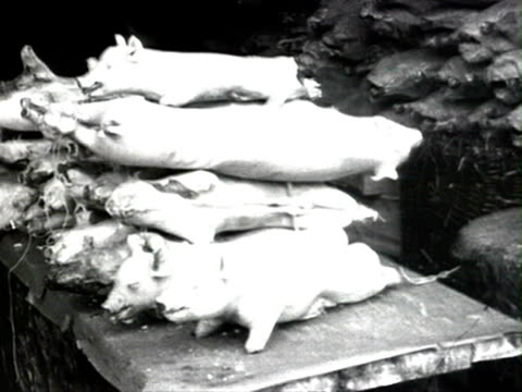 pigs and poultry to sell audio / moscow, russia - anno 1925 video stock e b–roll