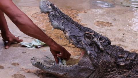 pikcing geld aus krokodilleder mund - drehort außerhalb der usa stock-videos und b-roll-filmmaterial