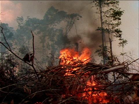 vídeos de stock, filmes e b-roll de a pile of branches burns in a rainforest. - arbusto