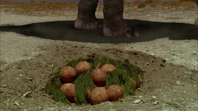 cgi, cu, zi, pile of brontosaurs eggs, inside view of fetus in egg - paleozoology stock videos and b-roll footage