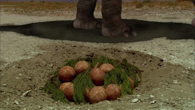 CGI, CU, ZI, Pile of Brontosaurs eggs, inside view of fetus in egg
