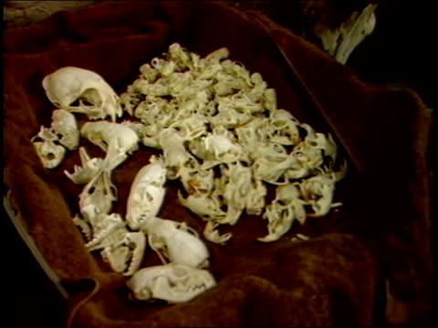 pile of cleaned animal skulls - 動物の骨点の映像素材/bロール