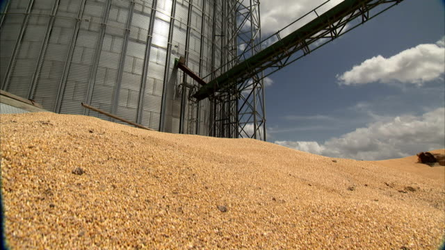 a pile of grain lies beneath a granary silo. - granary stock videos & royalty-free footage