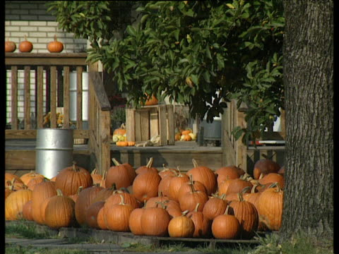 pile of pumpkins on pavement in amish town piled on top of each other under big tree in front of house porch - amish stock videos & royalty-free footage