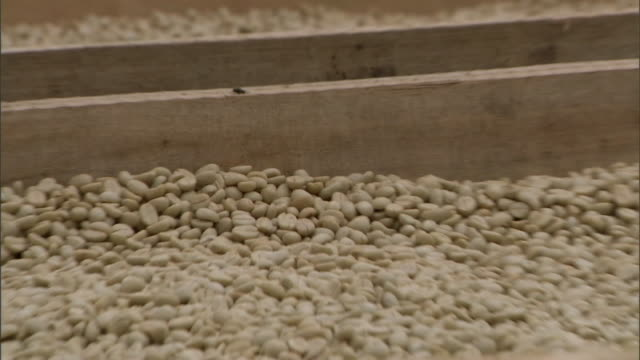 piles of coffee beans dry on large framed screens. - plantation stock videos & royalty-free footage