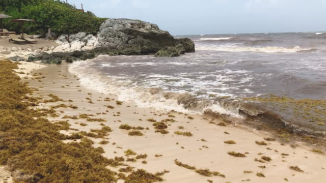 80 Top Sargassum Video Clips and Footage - Getty Images
