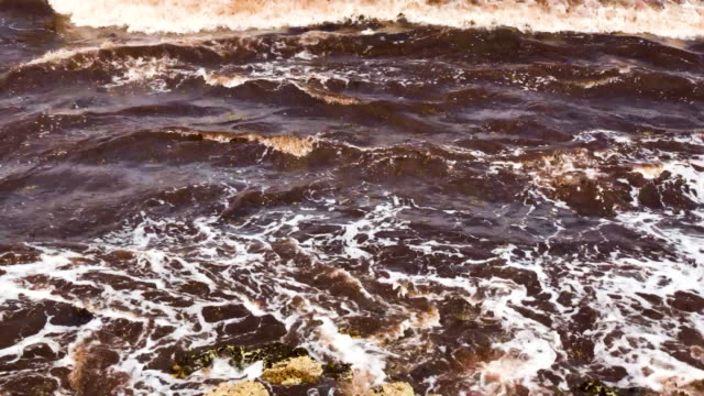 piles of sargassum, a seaweed-like algae, sits on a beach on june 13, 2019 in tulum, mexico and ocean water upwelling brings nutrients up from the... - alge stock-videos und b-roll-filmmaterial