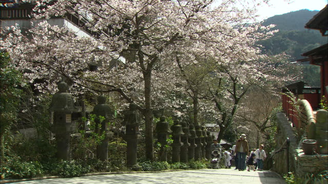 """Pilgrims walk along cherry blossom lined path which is part of """"New 88 Temples of Sasaguri"""" route"""