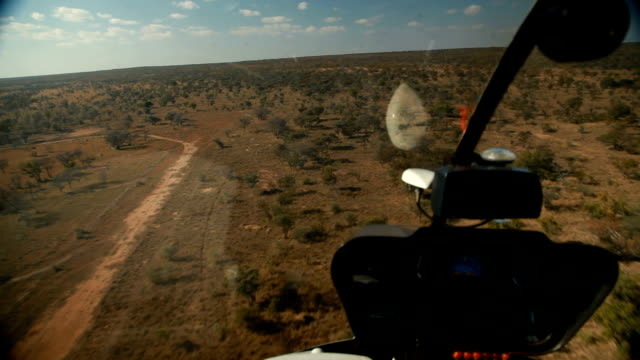 vídeos de stock e filmes b-roll de pilot flying helicopter over the bushveld rhino poaching is a major threat to the extinction of rhinos living in and around nature reserves in south... - ponto de vista de helicóptero