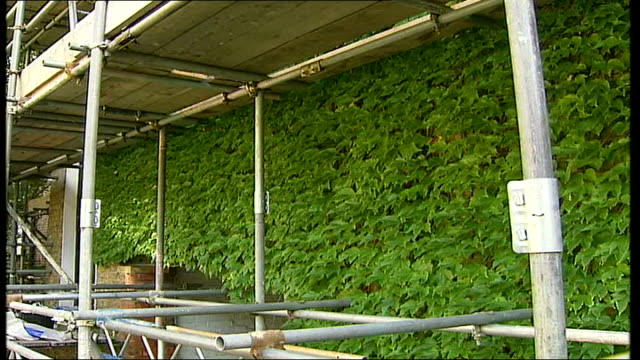 housing block residents to pay for maintenance of creeper vine creeper covering building - creeper stock videos and b-roll footage