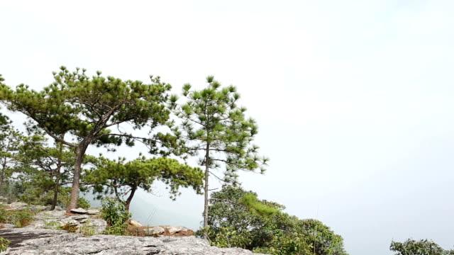 vídeos y material grabado en eventos de stock de pine y cielo - pinaceae
