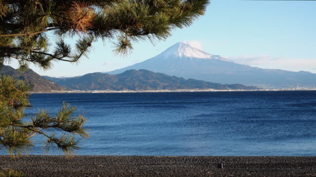 pine branches swinging in front of mt. fuji (miho-no-matsubara) - shizuoka prefecture stock videos and b-roll footage