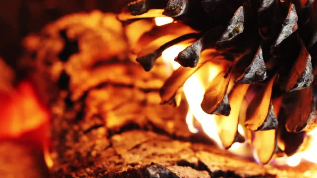 Pine cone in flames