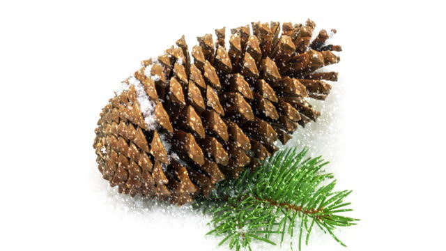 pine cone in the snow - pinecone stock videos & royalty-free footage