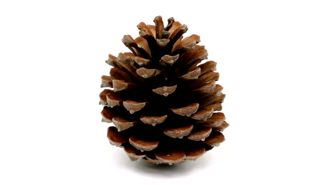 pine cone - pinecone stock videos & royalty-free footage