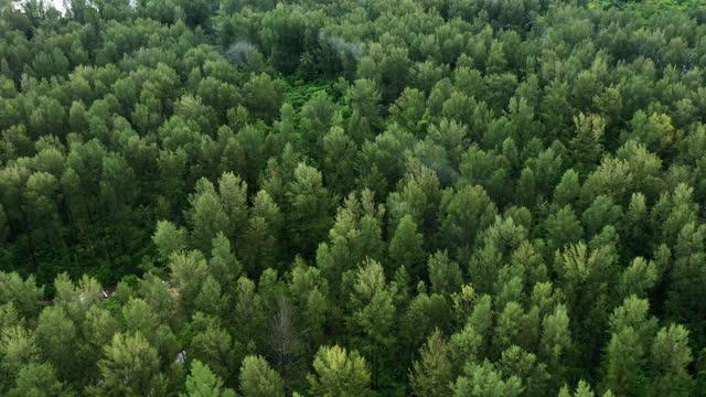 vídeos de stock, filmes e b-roll de vista aérea da floresta de pinheiros - pinhal
