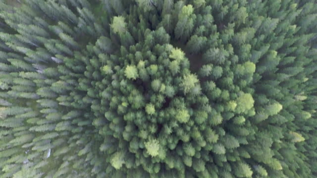 pine forest. aerial view - vancouver canada stock videos and b-roll footage