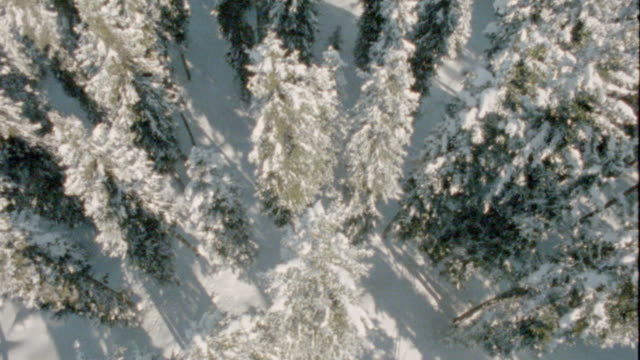 vídeos de stock e filmes b-roll de aerial overhead pine forest covered with snow - coniferous