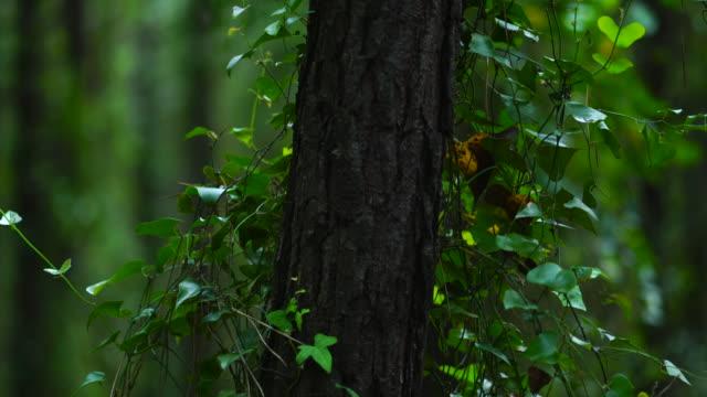 vídeos y material grabado en eventos de stock de pine forest, dunas de liencres natural park, pielagos municipality, cantabria, spain, europe - pinar