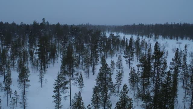 stockvideo's en b-roll-footage met dennenbos in het sneeuwt winterseizoen luchtfoto - conifeer
