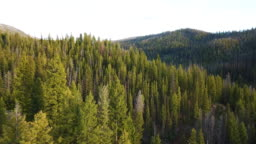 Pine Forest Rocky Mountains Idaho Wilderness Aerial