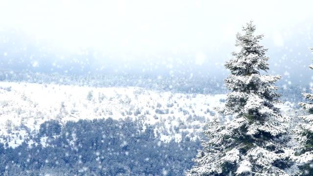vidéos et rushes de hd: pine forest - neige fraîche