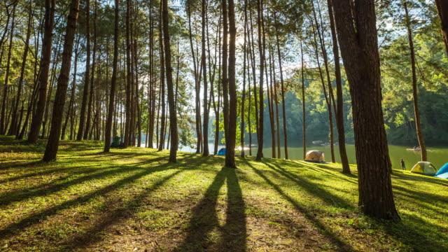 Pine tree und Sonnenaufgang Zeitraffer.