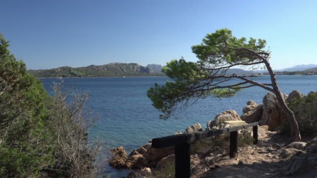 Pine tree at rocky coast