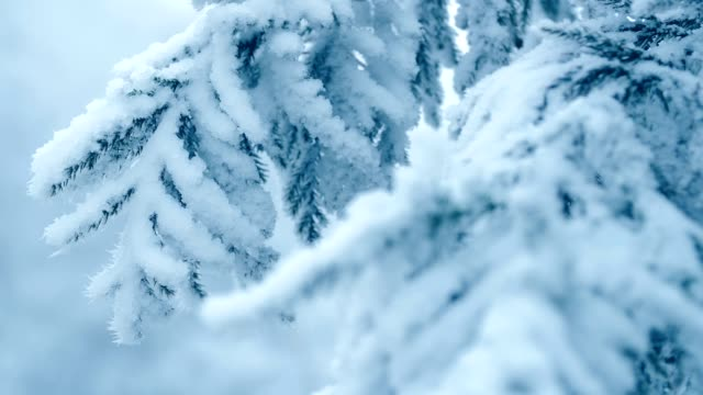 pine tree branch with snow - frost stock videos & royalty-free footage