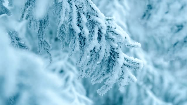 pine tree branch with snow - pine branch stock videos & royalty-free footage