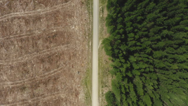 pine tree deforestation from above - forestry industry stock videos & royalty-free footage
