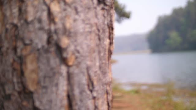pinienwald rund um den see - kiefer stock-videos und b-roll-filmmaterial
