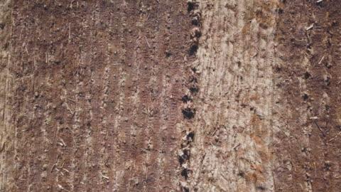 pine tree forest deforestation - baumstumpf stock-videos und b-roll-filmmaterial