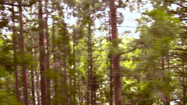 日本アルプスに松木森林自然ビューの観光列車 - 松の木点の映像素材/bロール