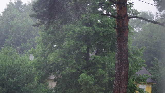 pine tree in the rain - pine branch stock videos & royalty-free footage