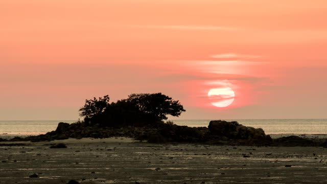 pine tree island at sunset - pinaceae stock videos & royalty-free footage