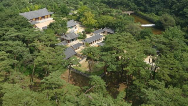 pine tree of sosuseowon confucian academy / yeongju-si, gyeongsangbuk-do, south korea - pinaceae stock videos & royalty-free footage