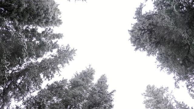 pine tree over snow - treetop stock videos & royalty-free footage