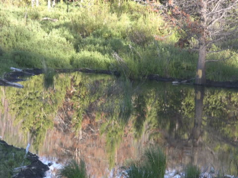 pine tree refection in water - pinaceae stock videos & royalty-free footage