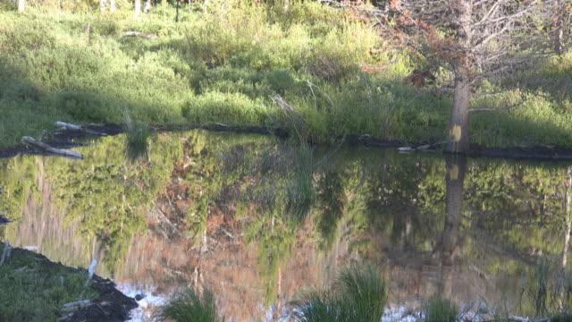 Kiefer Spiegelbild im Wasser