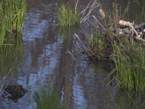 pine tree reflection in water with grass - pinaceae stock videos & royalty-free footage
