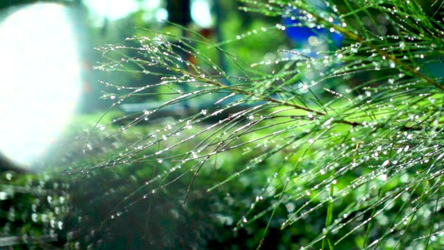 pine tree swing in slow motion - cranial nerve stock videos & royalty-free footage