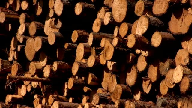 Kiefer Holz stack