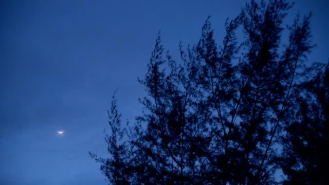 Pinheiro superior à noite