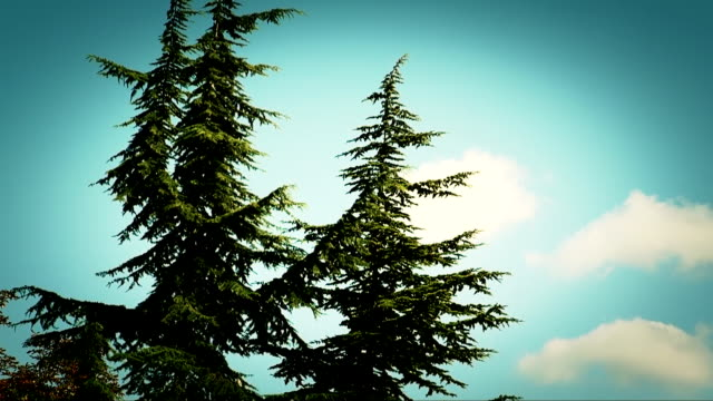 pine tree - swaying stock videos & royalty-free footage