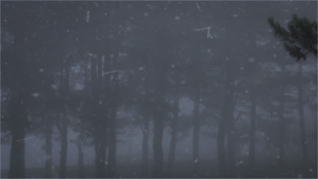 pine tree with foggy in a snowing days