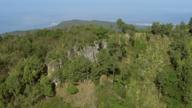 stockvideo's en b-roll-footage met pine trees cover the blue mountains near the caribbean sea in jamaica. - jamaica