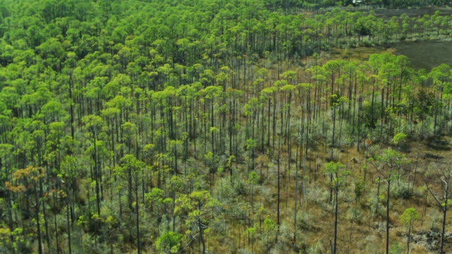 pine trees growing from florida bayou - aerial - 泥沼地点の映像素材/bロール