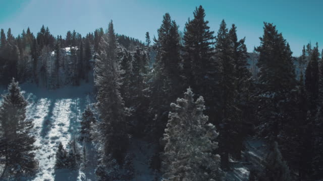 pine trees in carson national forest, tierra amarilla, new mexico, united states - kieferngewächse stock-videos und b-roll-filmmaterial