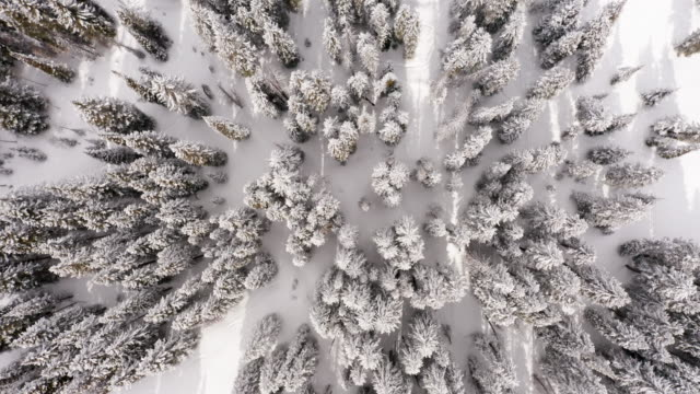 pine trees in winter aerial top down - woodland stock videos & royalty-free footage
